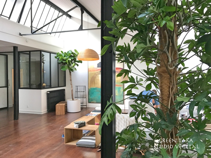 Philodendron Pedatum et Ficus Lyrata Green Tara studio végétal Tag