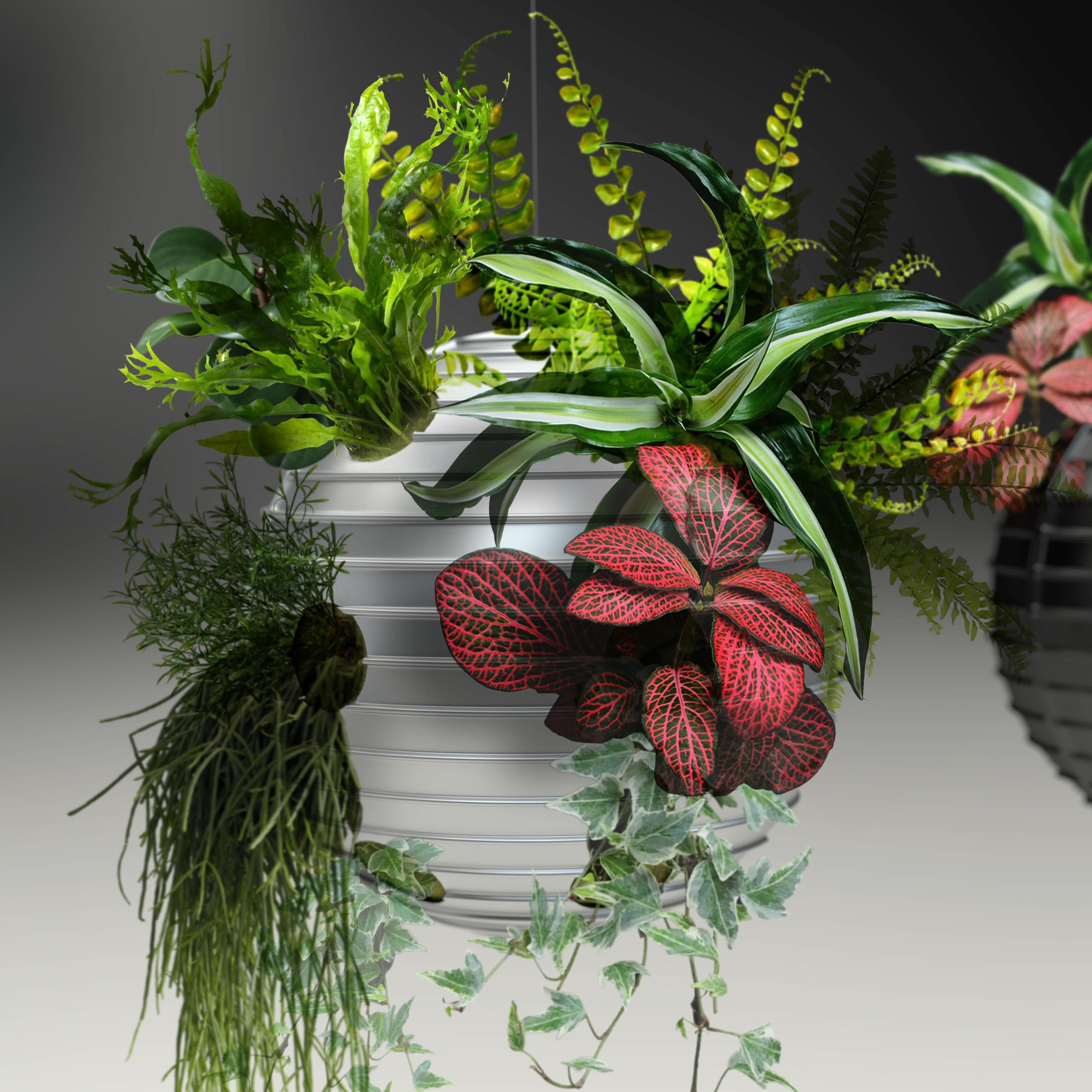 Boule argent 02 + plante